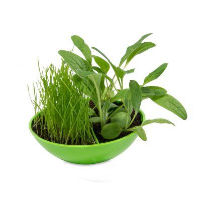 Schaukelschale mit Steg grün